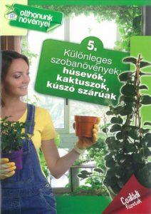 Különleges szobanövények: húsevők, kaktuszok, kúszó szárúak