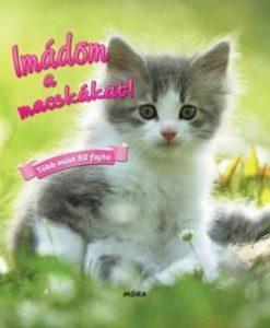 Imádom a macskákat!