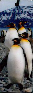3D Könyvjelző - Pingvin