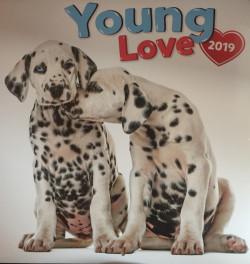 Falinaptár (lemez) - Young Love 2019