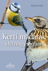 Kerti madarak életnagyságban