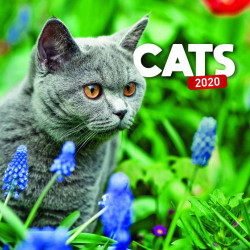 Cats lemeznaptár 2020