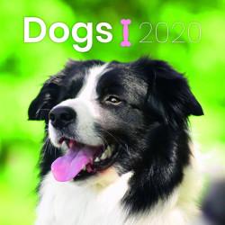 Dogs lemeznaptár 2020