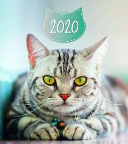 Cats 2020 falinaptár