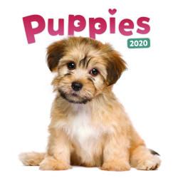 Puppies lemeznaptár 2020